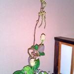 バラと菜の花