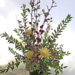 紅葵と紫式部