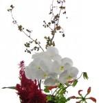 胡蝶蘭とツルウメモドキ