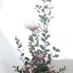 ヒイラギと菊