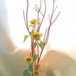 向日葵とミツマタ
