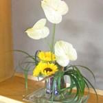 アンスリウムと向日葵