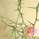 カラタチと菊