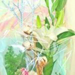 コットンツリーの花束