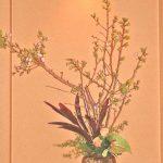 八重桜とアンスリウム