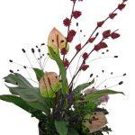 紅葵とアンスリウム