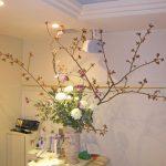 吉野桜とリューココリーネ