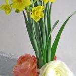 黄房水仙とラナンキュラス