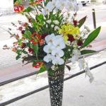 胡蝶蘭とグロリオーサ