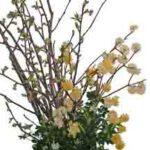 銀葉と黄花ミツマタ