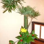 青竹と千両のアレンジメント