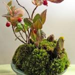 福寿草の寄せ植え