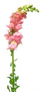 2月19日の誕生花