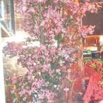 花水木の活けこみ