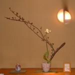吉野桜とオーニソガラム(アラビカム)