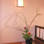 枝垂れ柳とロウバイ