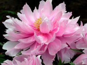 5月14日の誕生花