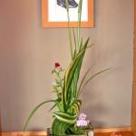 花菖蒲とシャガの葉