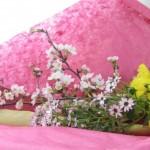 吉野桜とイエローサルタンの花束