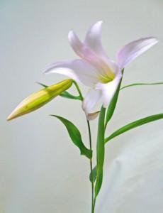 6月28日の誕生花