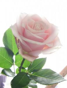 6月9日の誕生花