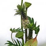 蓮の実とパイナップルリリー