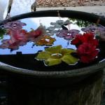 水盤のハイビスカス