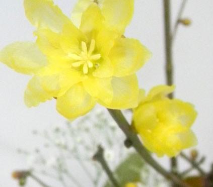 1月5日の誕生花
