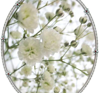 4月4日の誕生花