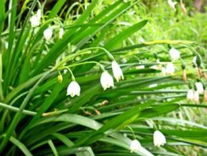 3月28日の誕生花