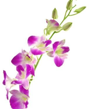 11月4日の誕生花