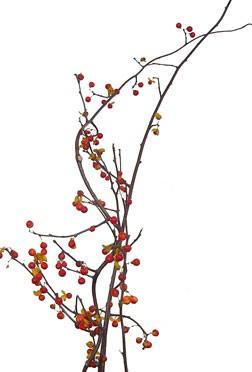 11月9日の誕生花