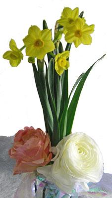房咲き水仙とラナンキュラス