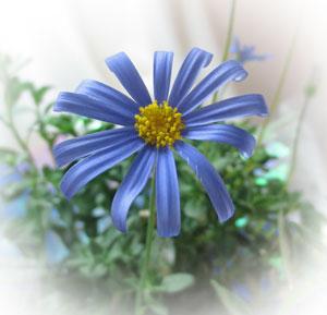 2月4日の誕生花