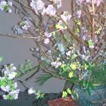 桜とオウバイ