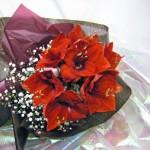 アマリリスとカスミソウを使った花束