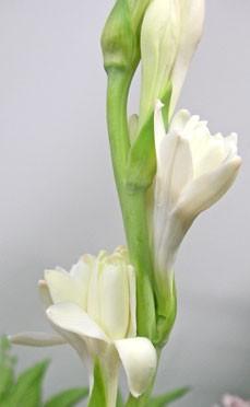 9月17日の誕生花