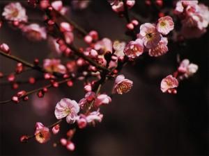 2月3日の誕生花