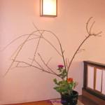 枝垂れ柳とキンセンカ