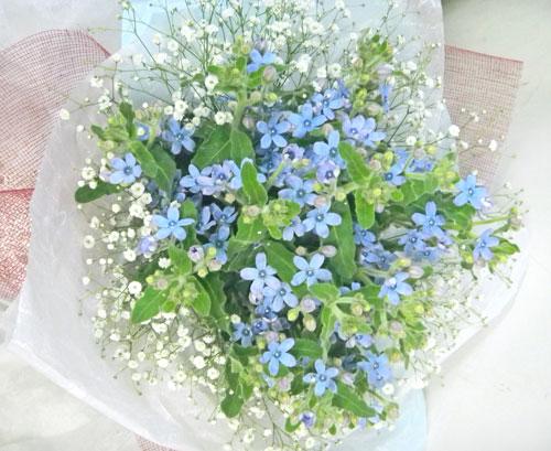 ブルースターとカスミソウの花束