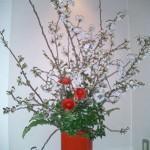 吉野桜とラナンキュラス