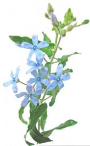 4月14日の誕生花