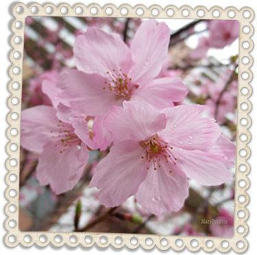 4月9日の誕生花
