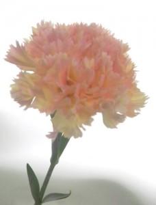 5月12日の誕生花