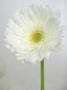 10月12日の誕生花
