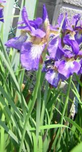 5月11日の誕生花
