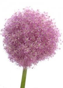 6月18日の誕生花