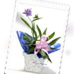 ストケシアの鉢植えギフト