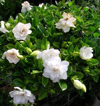 6月29日の誕生花