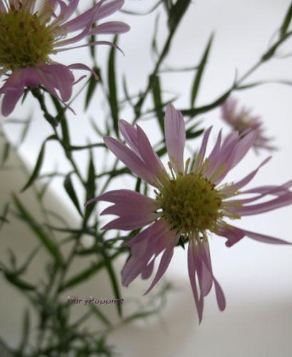 9月5日の誕生花